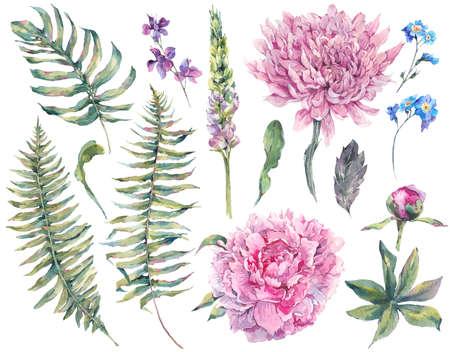 Stel vintage waterverf elementen van bloeiende pioen, chrysant, varens, wilde en tuin bloemen, aquarel illustratie op een witte achtergrond