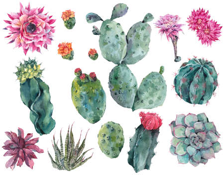 desert cactus: Set of watercolor cactus, succulent, flowers, twigs, isolated watercolor illustration on white Natural watercolor summer design floral elements, botanical collection in boho style Stock Photo