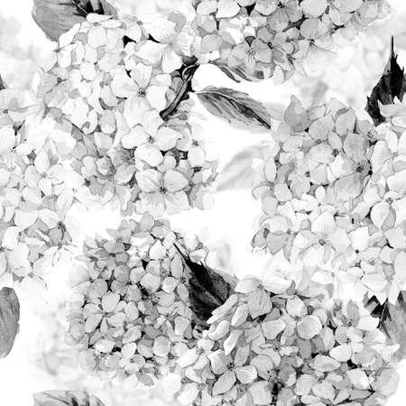fondo blanco y negro: Verano monocromático acuarela patrón floral sin fisuras la vendimia con el Hydrangea floreciente, natural Ilustración botánica. En blanco y negro