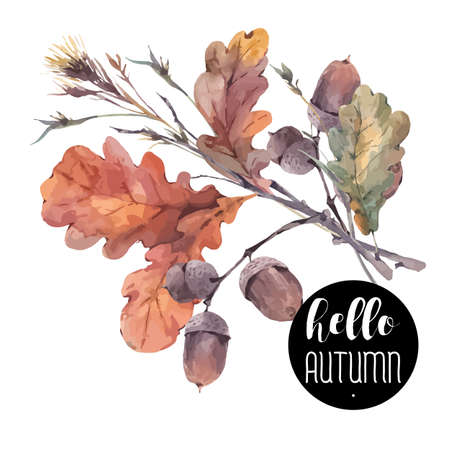 Autumn vintage bouquet of twigs, yellow oak leaves and acorns. Botanical illustrations. Greeting card. Isolated on white background Vettoriali