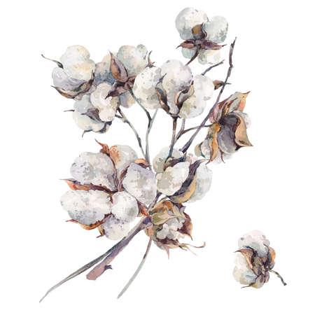 나뭇 가지와 목화 꽃의 수채화 빈티지 꽃다발. 식물 수채화 그림입니다. 인사말 카드. 흰색 배경에 고립