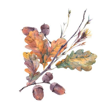 수채화가 나뭇 가지, 노란색 오크 잎과 도토리의 빈티지 꽃다발. 식물 수채화 그림입니다. 인사말 카드. 흰색 배경에 고립 스톡 콘텐츠