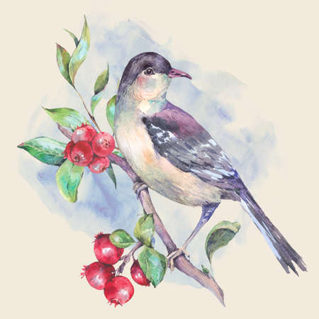 Vintage hand drawing watercolor card, bird on a branch with red berries. Watercolor natural illustration