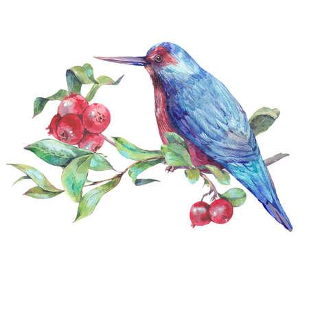 oiseau dessin: Vintage dessin à la main carte aquarelle, oiseau bleu sur une branche avec des baies rouges. Illustration d'aquarelle naturelle