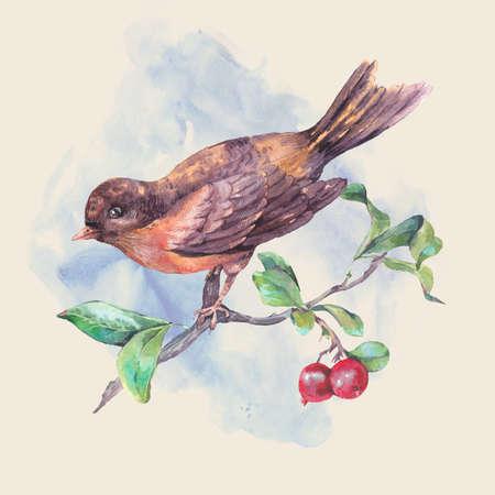 oiseau dessin: Vintage dessin à la main carte aquarelle, oiseau sur une branche avec des baies rouges. Illustration d'aquarelle naturelle Banque d'images