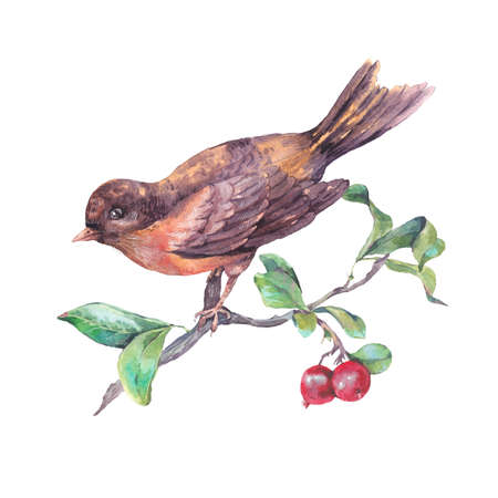 Vintage hand drawing watercolor card, bird on a branch with red berries. Watercolor natural illustration isolated on white Stock Photo