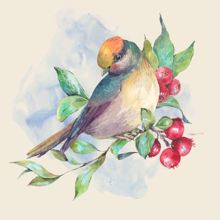 red berries: Vintage hand drawing watercolor card, bird on a branch with red berries. Watercolor natural illustration