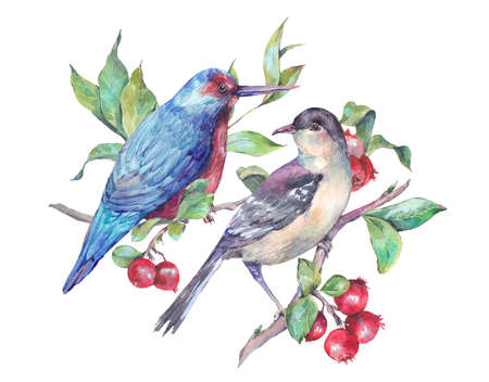 red berries: Vintage hand drawing watercolor card, pair of birds on a branch with red berries. Watercolor natural illustration