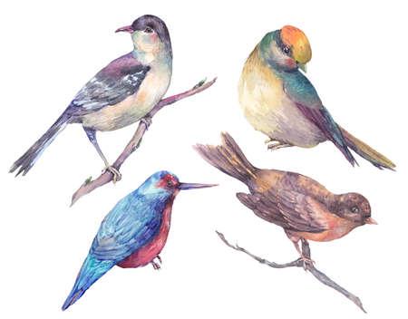 カラフルな水彩絵の具のセット鳥の分離の白い背景、自然の風景、水彩の鳥のコレクション