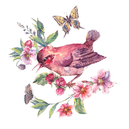cherry branch: Vintage watercolor floral card, bird on a blooming branch with gentle pink flowers, butterflies and twigs, natural botanical watercolor illustration isolated on white Stock Photo