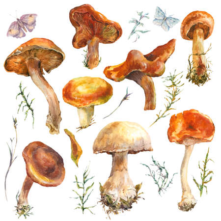 fungus: Set of watercolor vintage mushrooms isolated on white. Fall harvest forest mushrooms. Natural autumn botanical collection.