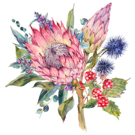 Classical vintage floral greeting card, watercolor bouquet of protea, stachys, thistles, blackberries and wildflowers, botanical natural watercolor illustration isolated on white Background