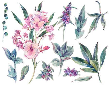 Set of floral vintage watercolor stachys, tropical and wildflowers, leaves branches, botanical natural watercolor illustration isolated on white background