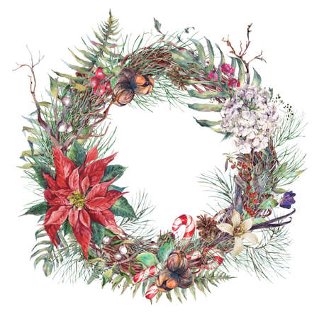 poinsettia: Christmas Vintage Floral Wreath, New Year Decoration with Poinsettia, Pine Branches, Nuts, Fir Cones. Botanical Natural Watercolor Round Frame Isolated on White Background Stock Photo