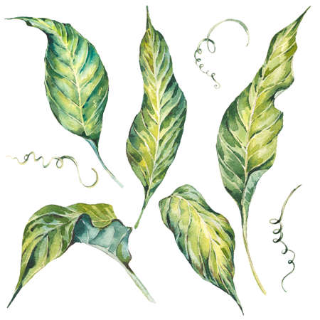 Summer set et of exotic watercolor green leaves