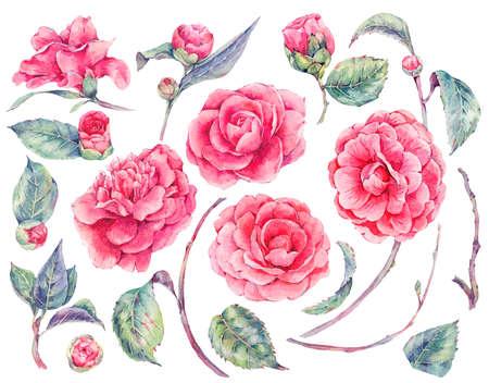 Set di fiori floreali di fiori di camelia Archivio Fotografico - 76034991