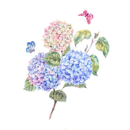 Watercolor branch of blooming hydrangeas and butterflies. Summer greeting card. Natural Botanical Illustration on white background Zdjęcie Seryjne