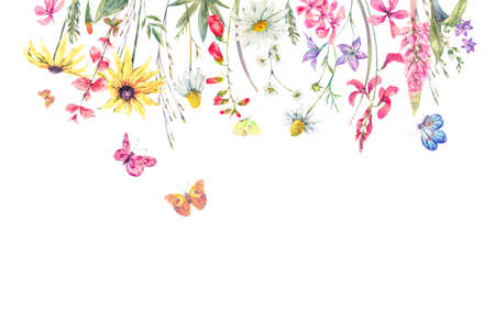 Watercolor natural summer greeting card with wildflowers. Meadow herbal, chamomile and butterflies. Botanical floral illustration isolated on white background