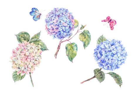 Set of blooming watercolor branch hydrangeas and butterflies. Summer design elements. Natural Botanical Illustration isolated on white background