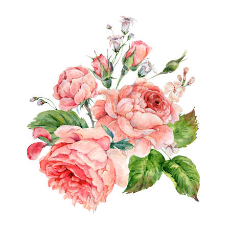 Vintage watercolor pink english roses Banque d'images