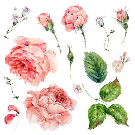 Set of vintage watercolor roses