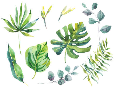 Set of watercolor green tropical leaves Stock Photo