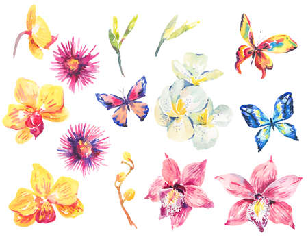 Watercolor set of floral tropical orchid elements Stock Photo