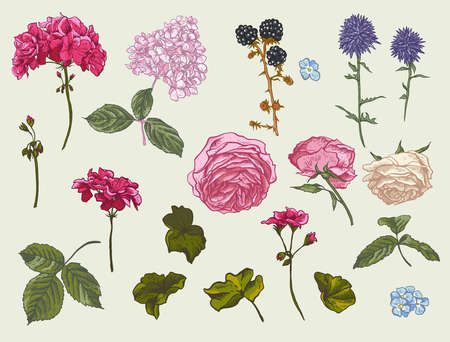 Vintage floral set of natural elements. Blooming roses, geraniums, meadow flowers, blackberry, leaves and stems. Nature vector flowers collection.