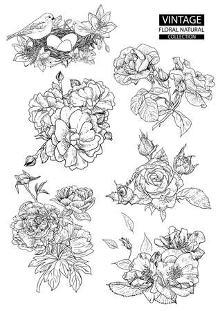 Floral outline coloring vector vintage collections