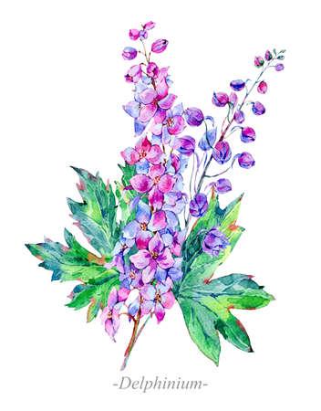 Watercolor summer medicinal flowers, Delphinium plant