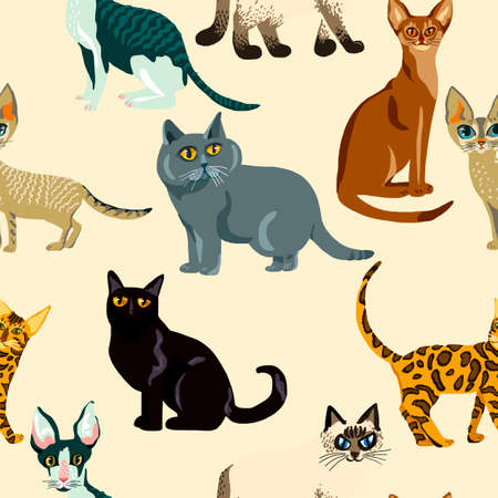 Cartoon cats seamless pattern,  Illustration  breeds of cats