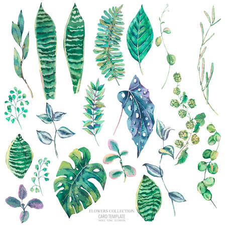 Vector set of green exotic leaves. Natural tropical greeting card, greenery botanical collection