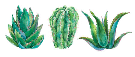Exotic natural vintage watercolor cactus greeting card. Cactus, succulent, plants, aloe vera. Botanical isolated natural Illustration on white background, greenery vibes