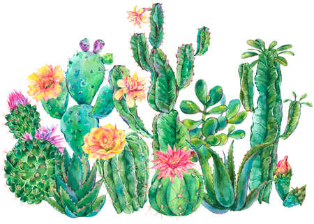 Exotic natural vintage watercolor blooming cactus greeting card. Cactus, succulent, flowers. Botanical isolated natural Illustration on white background