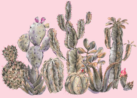 Exotic natural vintage watercolor cactus greeting card. Cactus, succulent, flowers, plant, aloe vera. Botanical isolated natural Illustration on pink background, greenery vibes Reklamní fotografie