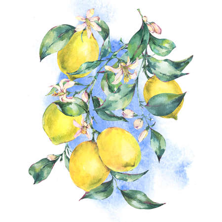 Watercolor vintage greeting card, branch of fresh citrus yellow