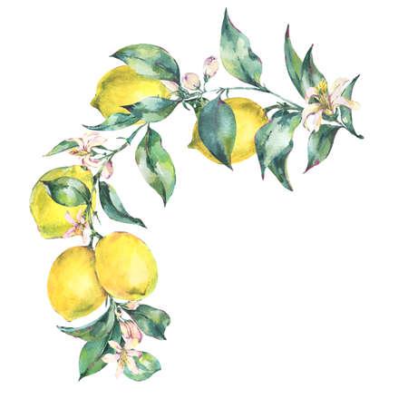 Watercolor vintage wreath, branch of yellow fruit lemo