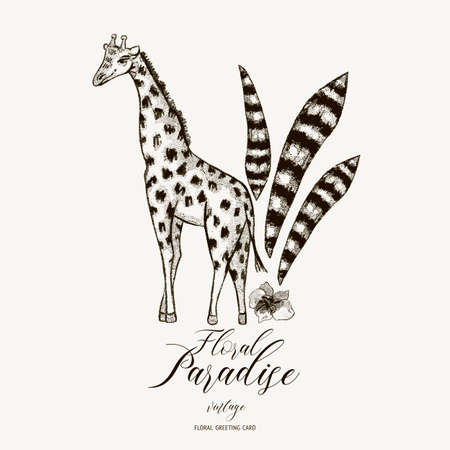 Vector black and white spring greeting card, vintage jungle illustration, Natural Exotic Tropical template with leaves and giraffe Ilustrace
