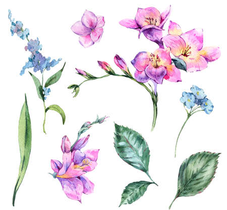 Set of Watercolor Vintage Floral Elements Blooming Freesia and G