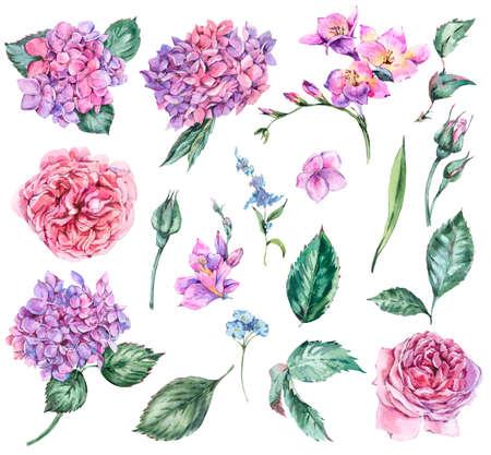 Set of Summer Watercolor Flowers Hydrangea, Freesia, Roses, Gard