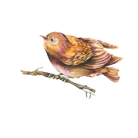 Natural  of a brown watercolors bird on branch,  isolated watercolor birds collection