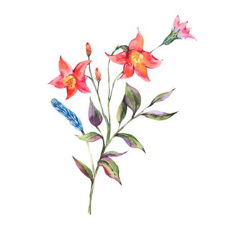 Watercolor summer bouquet of wild flowers. Reklamní fotografie