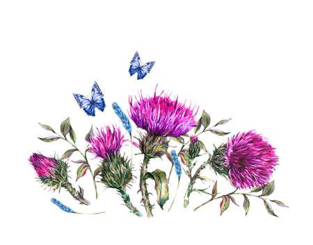 Watercolor thistle, blue butterflies, wild flowers