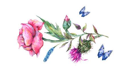 Watercolor thistle, poppy, blue butterflies, wild flowers Reklamní fotografie