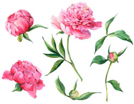 Conjunto de peonías de flores rosas acuarela vintage, hojas, ramas