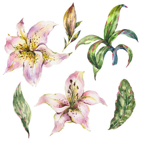 Set of White Lily, Watercolor Royal Lilies Flowers Collection