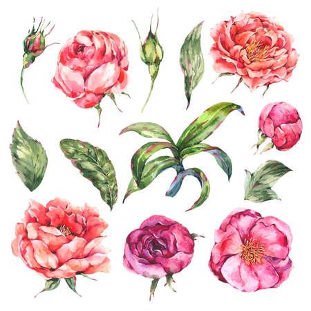 Vintage Watercolor Set of Pink Blooming Flowers. Zdjęcie Seryjne