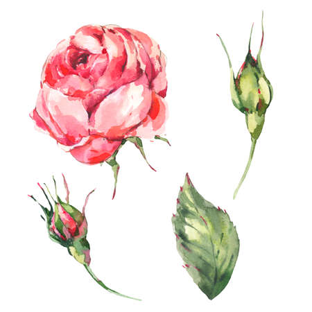 Floral Set of Classical Watercolor Vintage Red Rose, Leaves, Buds.