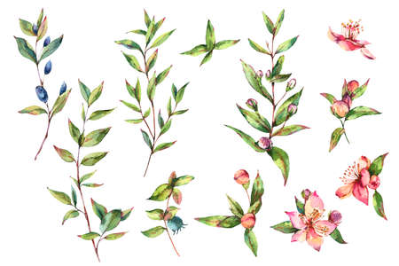 Watercolor Green Myrtle. Set of Vintage Watercolor Green Leaves, Twigs, Branches, Blooming flowers of Myrtle