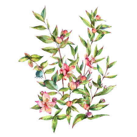 Watercolor Myrtle. Vintage Watercolor Greeting Card with Green Leaves, Twigs, Branches, Blooming flowers of Myrtle